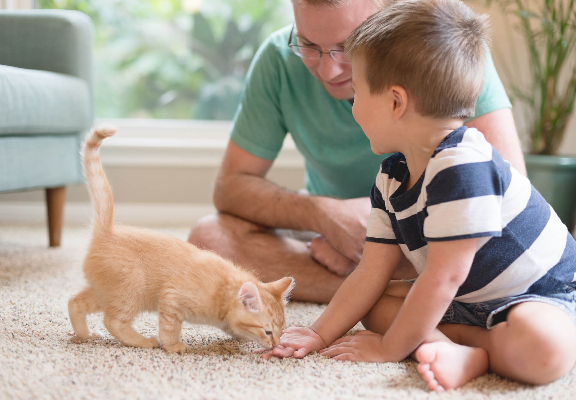 kitten with little boy and man